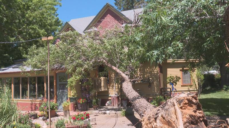 Severe weather in the area caused a family to lose an ash tree.