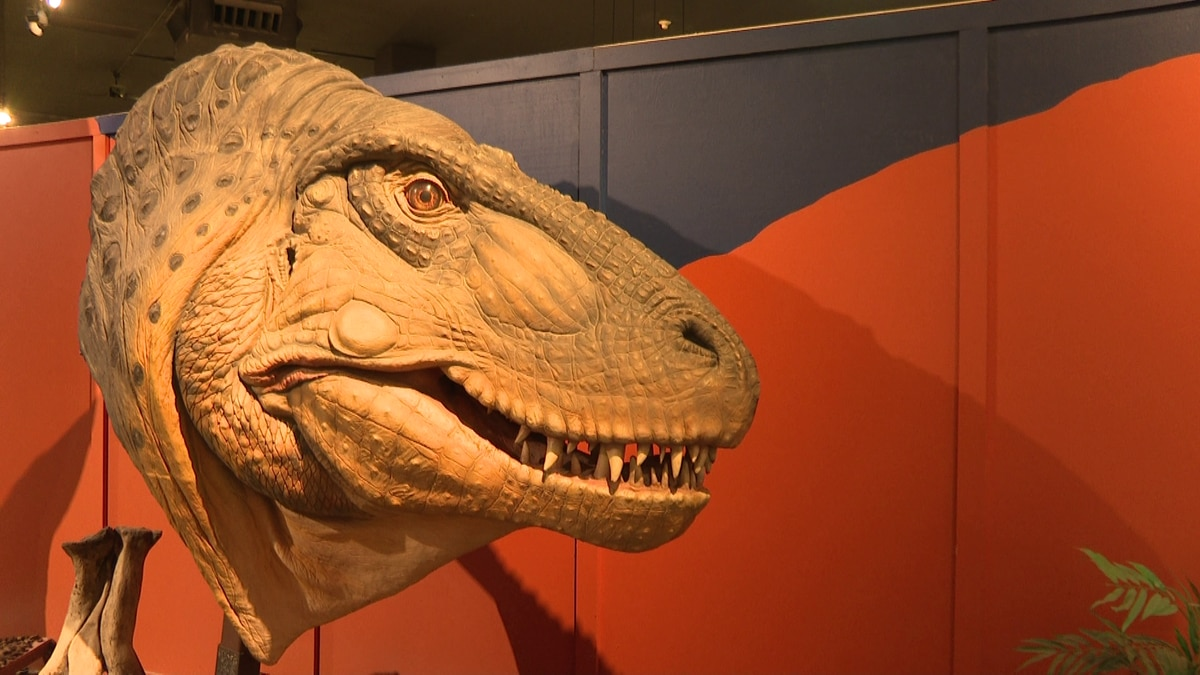 Dino Days at the Museum of Western Colorado will happen from now until September 7.