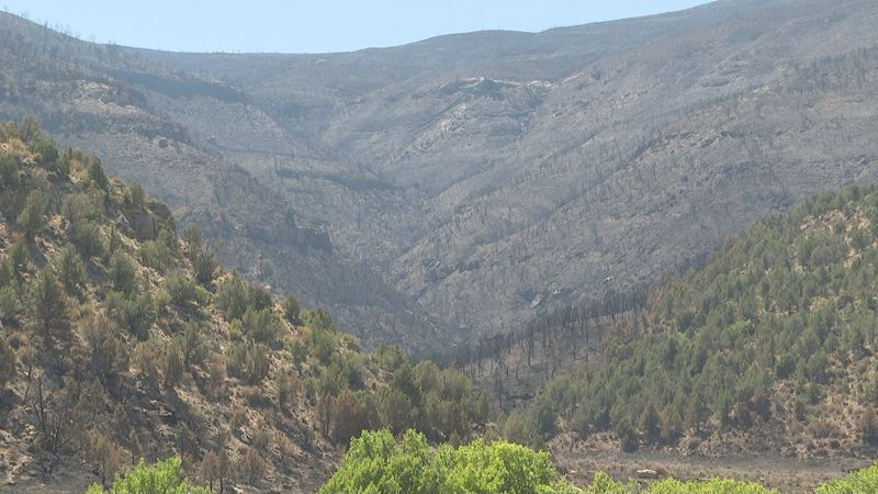 Pine Gulch Fire recovery