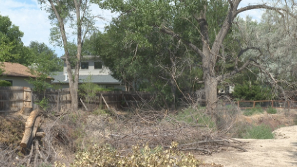 Some fear the potential fire danger in the dry heat and trees falling, telling us that a tree from the creek has already fallen on a house in the neighborhood.
