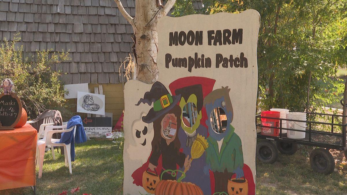 Moon Farm pumpkin patch opened on Saturday