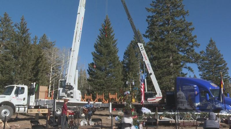 55 foot Engleman Spruce going to D.C.