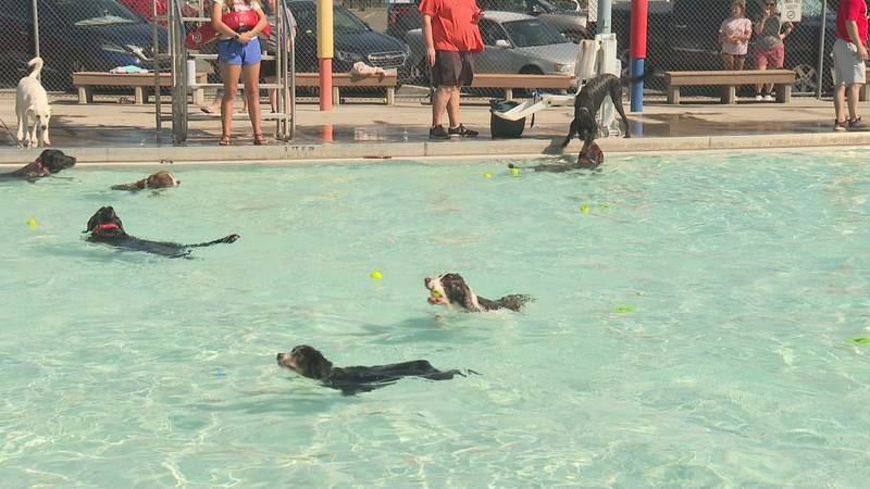 Dog days at Lincoln Park pool