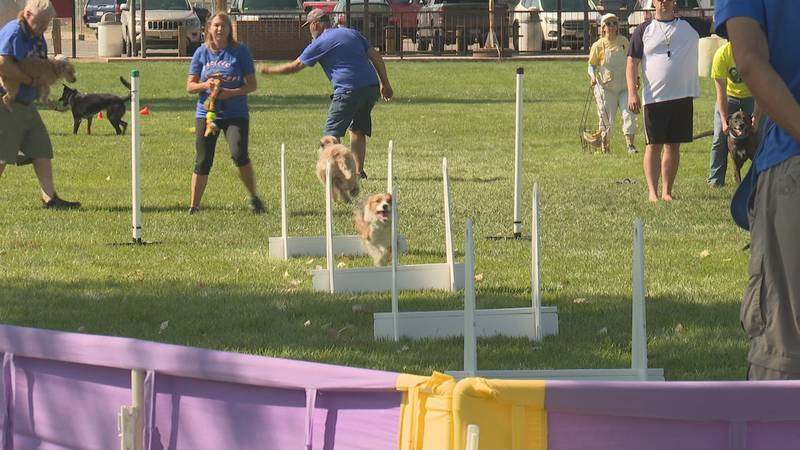 North American Flyball Association tournament hosted by Westside Woofers