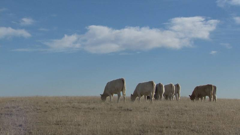 The Colorado Department of Agriculture announces new state veterinarian.