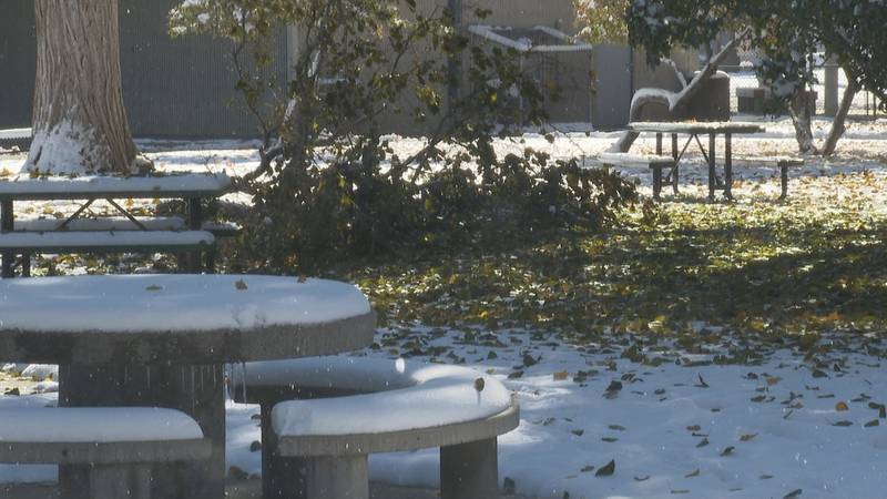 Dealing with damaged trees