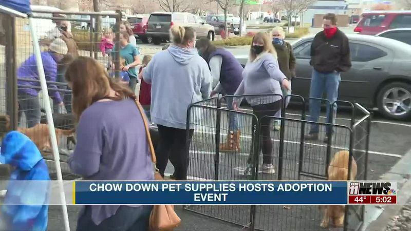 Chow Down Pet Supplies partners with Harmony Animal Matchmaker for dog adoption event
