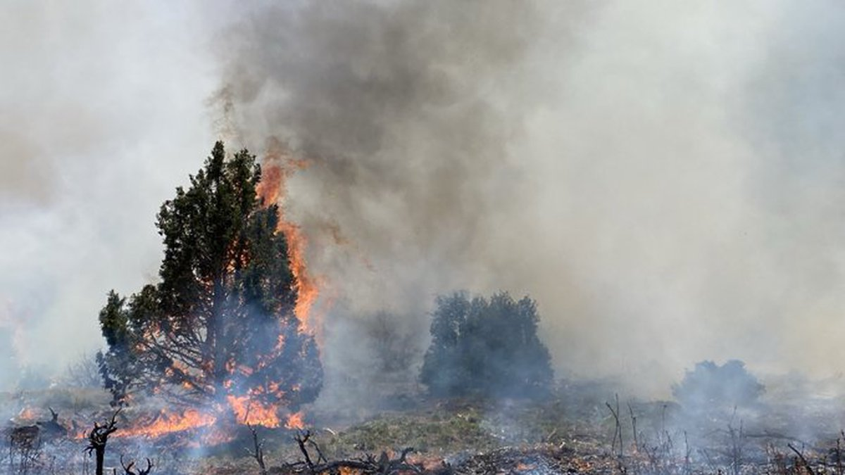 Picture of the fire that started Monday near Nucla. It is currently burning around 15 acres.