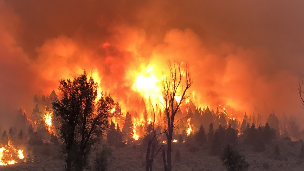 Photo from the Pine Gulch Fire, taken Aug. 18
